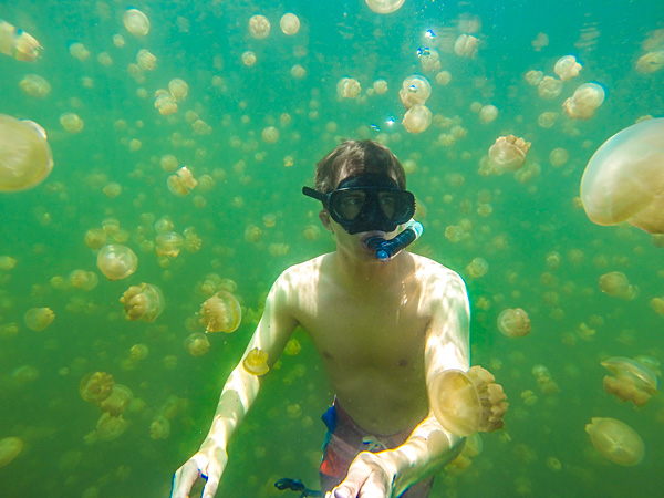 Bart swimming between thousands of jellyfish in Palau