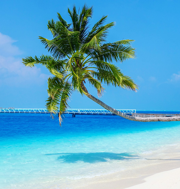 Palm tree at Conrad Maldives Rangali Island